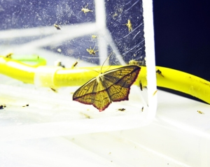 moth5b